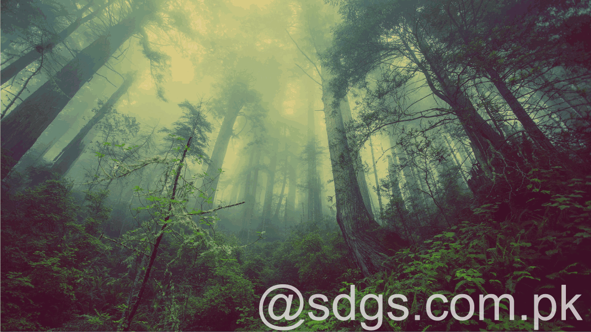 Education critical to ensure future of forests.